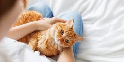 Jaka byłaby Twoja wymarzona relacja z kotem?