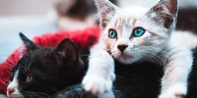 Test: jaka rasa kota do Ciebie pasuje?