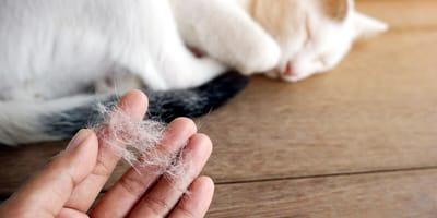Według ciebie wypadanie sierści u kota: