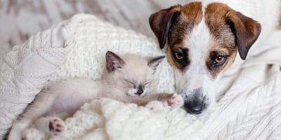 Czy masz już inne zwierzęta domowe?