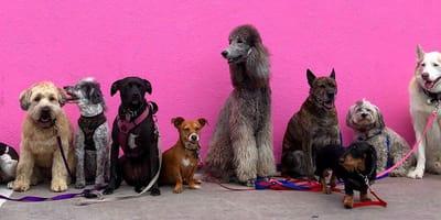 Quiz: sprawdź, która rasa psa do Ciebie pasuje
