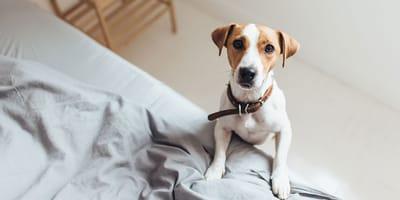 Jak długo Twój pies będzie zostawał sam w domu?