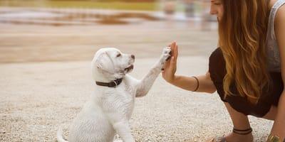 Jakie jest Twoje doświadczenie z psami?