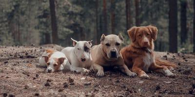 Jakiej wielkości powinien być Twój wymarzony pies?