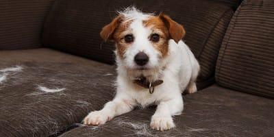 Gubienie sierści u psa to dla Ciebie: